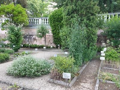 Ortobotanico di Padova